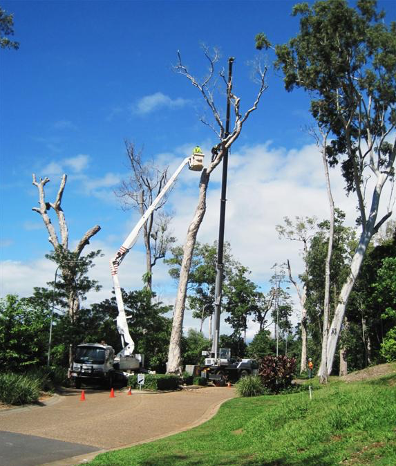 Tree Lopper Cairns