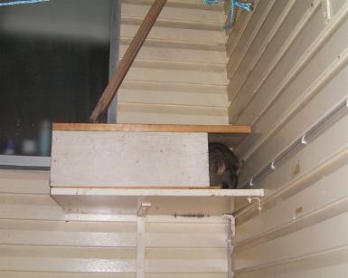 House possum hiding in a box.